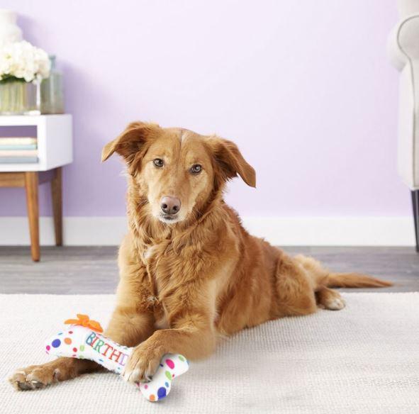 box bone buon compleanno cane