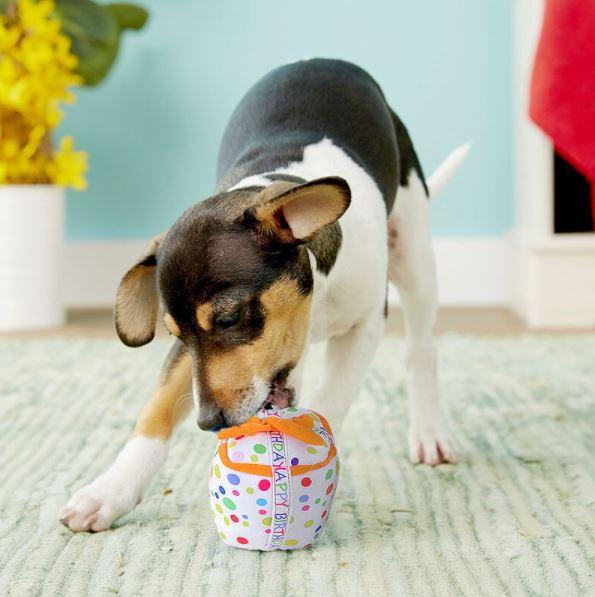 special box buon compleanno cane vickaus