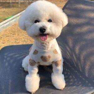 maglione cane orsetto