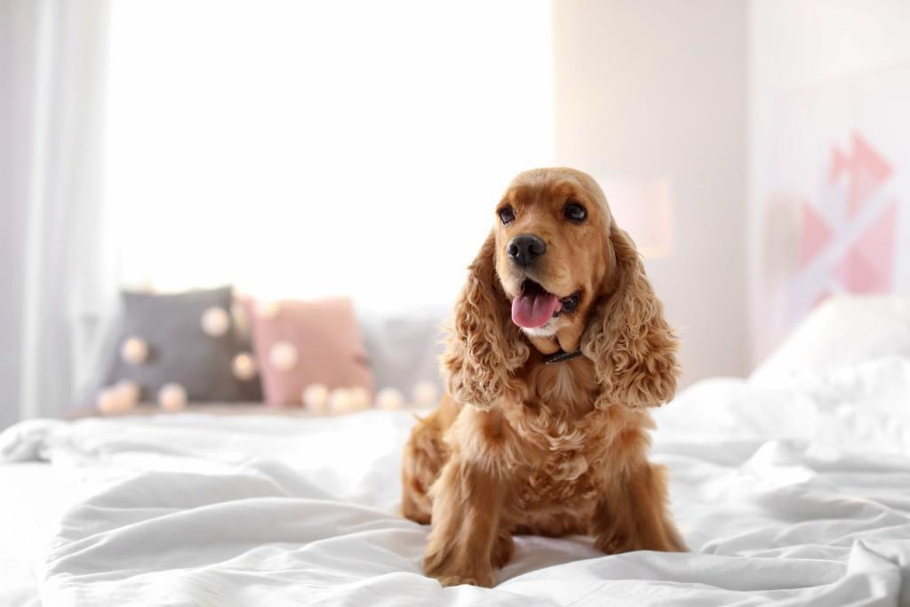 profumo igienizzante anti odore cani
